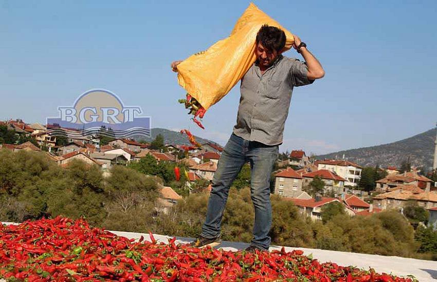 Beyşehir'de Deneme Amaçlı 'İsot Biberi' Yetiştirildi